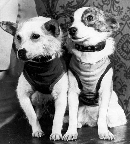 Рис. 7 Собаки-космонавты Белка и Стрелка в 1960 году. Фото ТАСС.