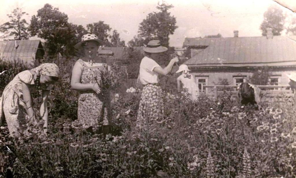 Рис.5. Город Химки. Московская областная станция юных натуралистов. Девочки собирают семена цветов. Фотография из семейного архива.